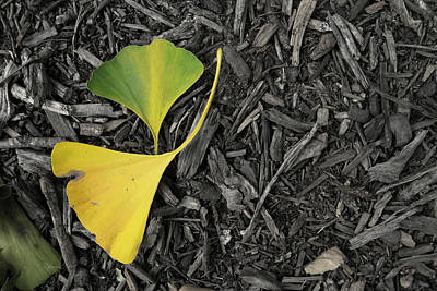 Photograph - Two Gingko Leaves by Sharon Popek