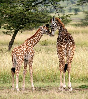 Kenya Digital Art - Two Giraffe - Best Friends by Nancy D Hall