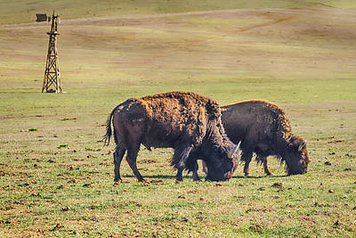 Photograph - Two Grazing Buffaloes On The Range by James BO Insogna