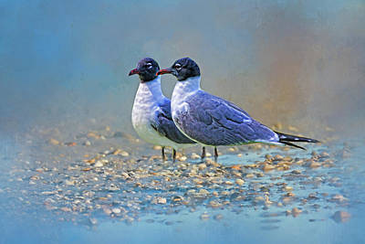 Photograph - Two Gulls At The Beach by HH Photography of Florida