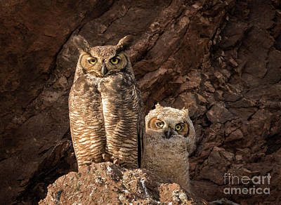 Photograph - Two Hoots by Alice Cahill