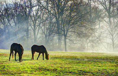 Photograph - Two Horse Morning by Sam Davis Johnson