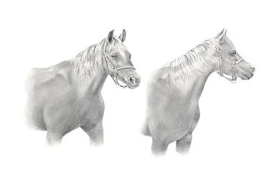 Drawing - Two Horse Study by Elizabeth Lock