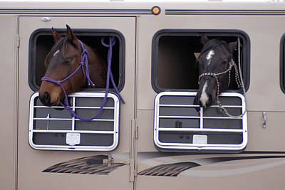 Two Horses Are Ready To Travel Art Print by Joel Sartore