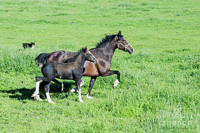 Photograph - Two Horses by David Arment
