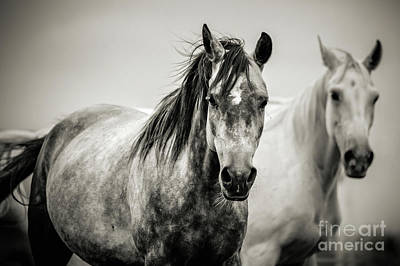 Photograph - Two Horses In Black And White by Dimitar Hristov