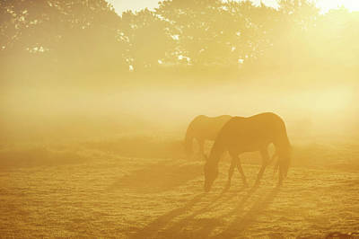 Photograph - Two Horses In Foggy Field by Jenny Rainbow