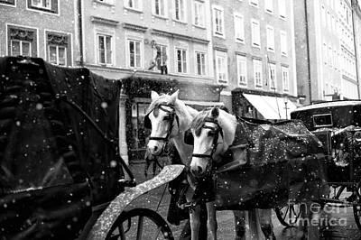 Two Horses In Salzburg Art Print by John Rizzuto