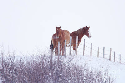 Two Horses In The Snow Art Print