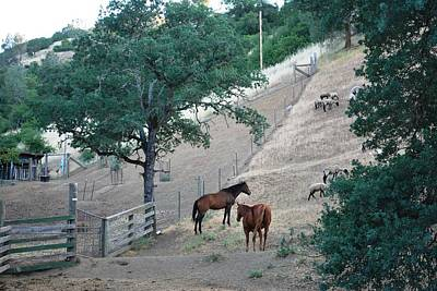 Photograph - Two Horses On A Hill by Matt Harang