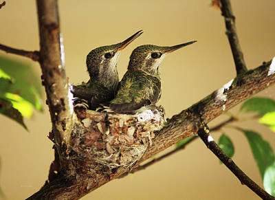 Photograph - Two Hummingbird Babies In A Nest by Xueling Zou
