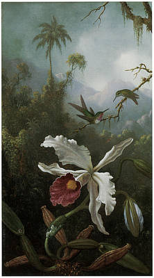 Two Hummingbirds Above A White Orchid Print by Martin Johnson Heade