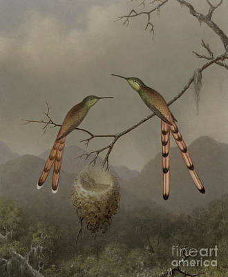 Baby Bird Painting - Two Hummingbirds With Their Young by Martin Johnson Heade