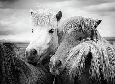 Photograph - Two Icelandic Horses Black And White by Matthias Hauser