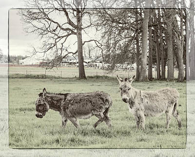 Photograph - Two Jack Asses by Jean Noren