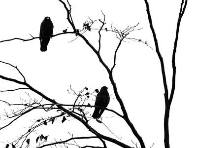 Two Jackdaws - Waiting Art Print by Philip Openshaw