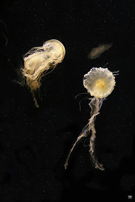 Photograph - Two Jellyfish by John Meader