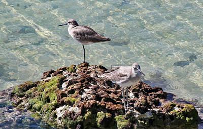 Photograph - Two Key West Gulls by Bob Slitzan
