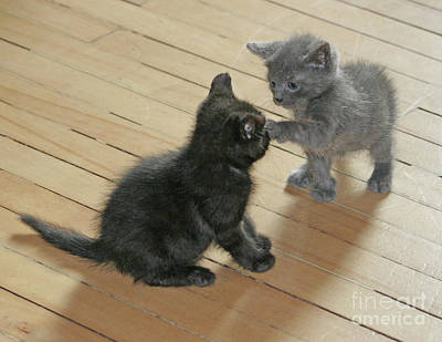 Photograph - Two Kittens by PJ Boylan
