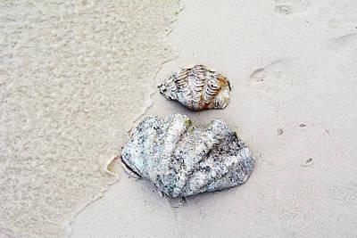 Photograph - Two Large Sea Shells On The Beach by Oana Unciuleanu
