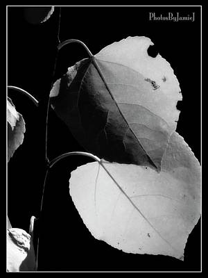Photograph - Two Leaves by Jamie Johnson