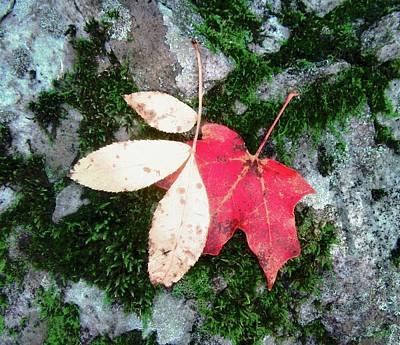 Photograph - Two Leaves by Stephanie Moore