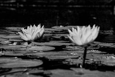 Photograph - Two Lilies by Ed Waldrop