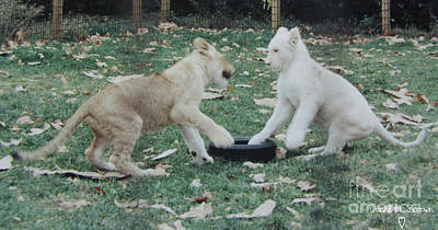 Photograph - Two Lion Cubs Playing by Donna Brown