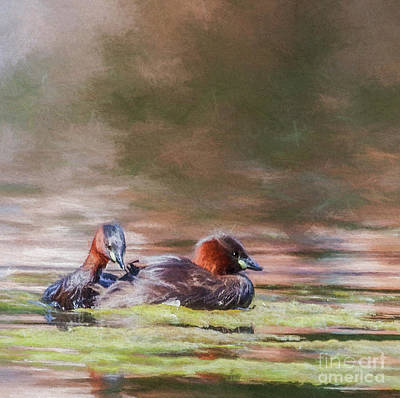 Digital Art - Two Little Grebes by Liz Leyden