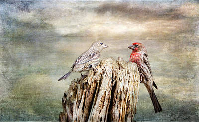 Photograph - Two Little Love Birds by Barbara Manis