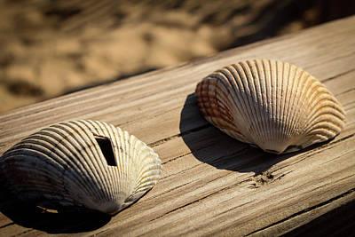 Two Little Shells Art Print by Carolyn Ricks