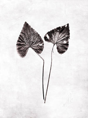 Photograph - Two Little Violet Leaves by Louise Kumpf