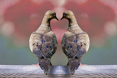 Photograph - Two Love Dove Birds by Randall Nyhof