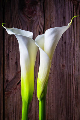 White Flower Photograph - Two Lovely Calla Lilies by Garry Gay