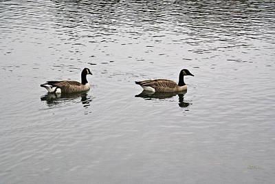 Two Lovely Canadian Geese Art Print by Douglas Barnett