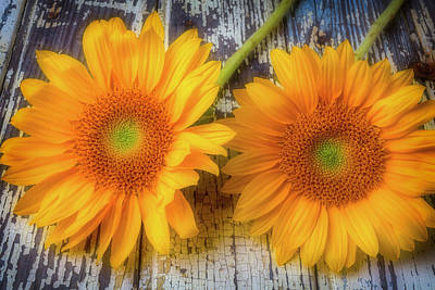 Photograph - Two Lovely Sunflowers by Garry Gay