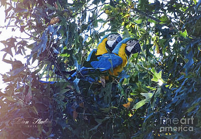 Photograph - Two Macaws Sitting A Tree by Melissa Messick