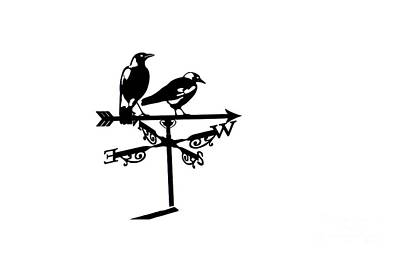 Magpies Digital Art - Two Magpies by India Rattray