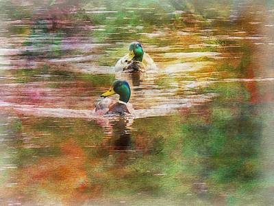 Digital Art - Two Male Mallards Swimming by Rusty R Smith