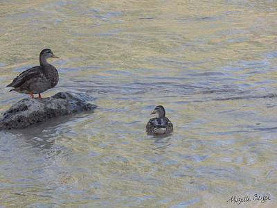 Photograph - Two Mallard Ducks by Mozelle Beigel Martin