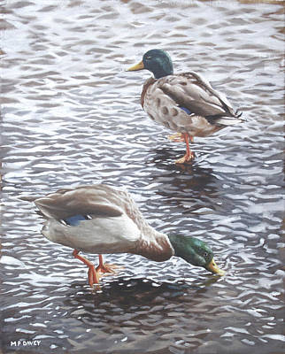 Painting - Two Mallard Ducks Standing In Water by Martin Davey
