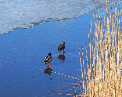 Photograph - Two Mallards On Ice by Ismo Raisanen