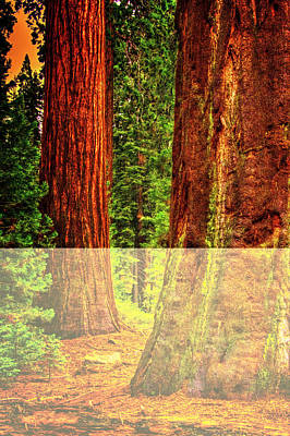 Photograph - Two Mature Sequoias In Grant's Grove by Roger Passman
