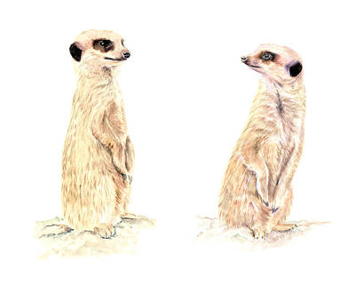 Mixed Media - Two Meerkats by Elizabeth Lock