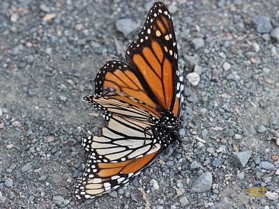 Two Monarchs Aflutter Art Print