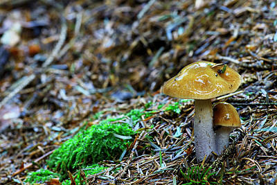 Brown Photograph - Two Mushrooms by Ivan Slosar