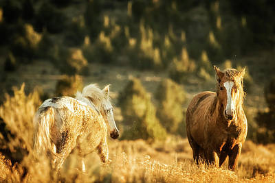 Photograph - Two Mustangs Post Playtime At The Waterhole by Belinda Greb