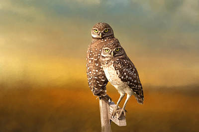 Burrowing Owl Photograph - Two Of Us by Kim Hojnacki