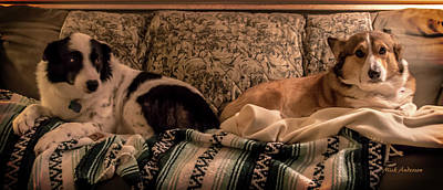 Photograph - Two On The Couch by Mick Anderson