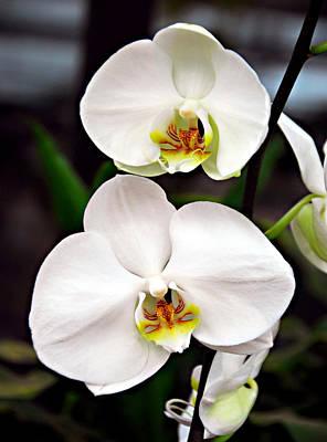 Two Orchids Art Print by JoAnn Lense